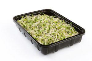 Broccoli Kiemen_605x403