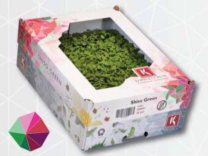 Shiso Green box