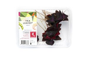 Tray Yka Leaves_0089a